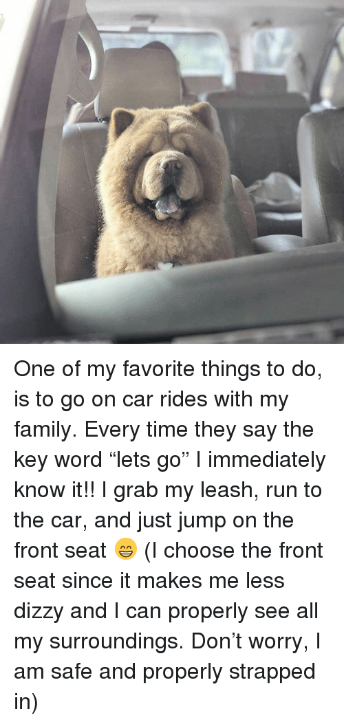 """Family, Memes, and Run: One of my favorite things to do, is to go on car rides with my family. Every time they say the key word """"lets go"""" I immediately know it!! I grab my leash, run to the car, and just jump on the front seat 😁 (I choose the front seat since it makes me less dizzy and I can properly see all my surroundings. Don't worry, I am safe and properly strapped in)"""