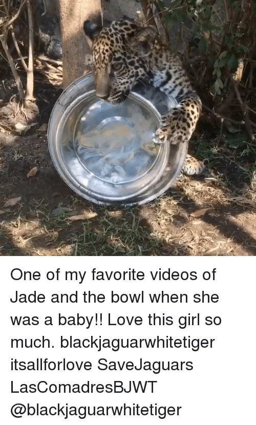 baby love: One of my favorite videos of Jade and the bowl when she was a baby!! Love this girl so much. blackjaguarwhitetiger itsallforlove SaveJaguars LasComadresBJWT @blackjaguarwhitetiger