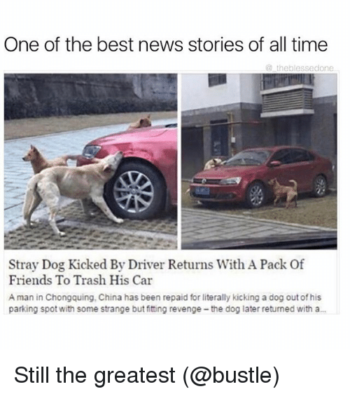 Friends, Funny, and Meme: One of the best news stories of all time  the blessedone  Stray Dog Kicked By Driver Returns With A Pack Of  Friends To Trash His Car  A man in Chongquing, China has been repaid for literally kicking a dog out of his  parking spot with some strange but fitting revenge-the dog later returned with a... Still the greatest (@bustle)