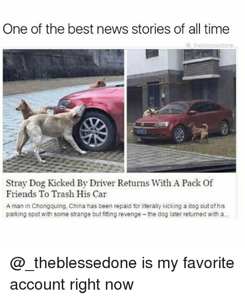 Friends, Funny, and News: One of the best news stories of all time  the blessedone  Stray Dog Kicked By Driver Returns With A Pack Of  Friends To Trash His Car  A man in Chongquing, China has been repaid for literally kicking a dog out of his  parking spot with some strange but fitting revenge-the dog later returned with a... @_theblessedone is my favorite account right now