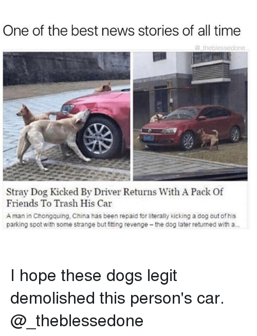 Dogs, Friends, and Memes: One of the best news stories of all time  theblessedone  Stray Dog Kicked By Driver Returns With A Pack Of  Friends To Trash His Car  A man in Chongquing, China has been repaid for literally kicking a dog out of his  parking spot with some strange but fitting revenge-the dog later returned with a... I hope these dogs legit demolished this person's car. @_theblessedone