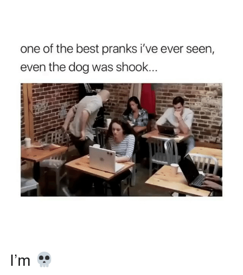 Memes, Best, and 🤖: one of the best pranks i've ever seen,  even the dog was shook... I'm 💀
