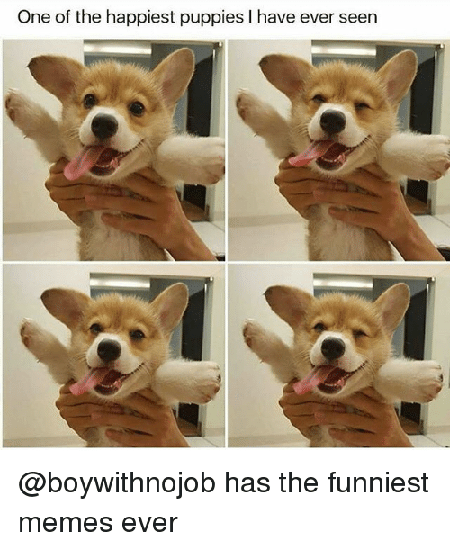 Seens: One of the happiest puppies I have ever seen @boywithnojob has the funniest memes ever