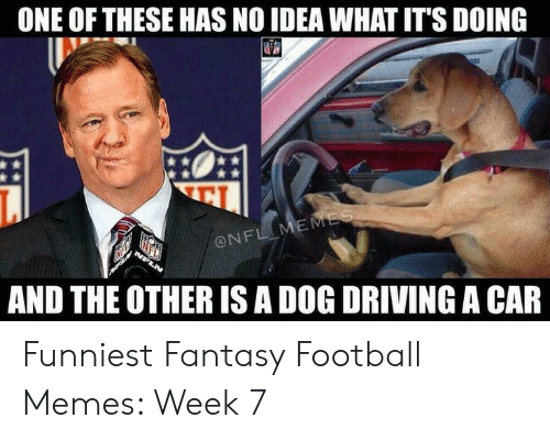 Fantasy Football Commissioner: ONE OF THESE HAS NO IDEA WHAT IT'S DOING  吧!  ONFL  AND THE OTHER IS A DOG DRIVING A CAR Funniest Fantasy Football Memes: Week 7