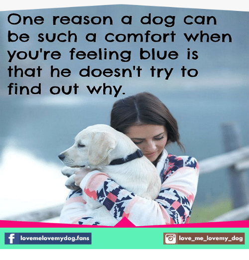 love my dogs: One reason a dog can  be such a comfort when  you're feeling blue is  that he doesn't try to  find out why.  love melovemydog.fans  S love me love my dog