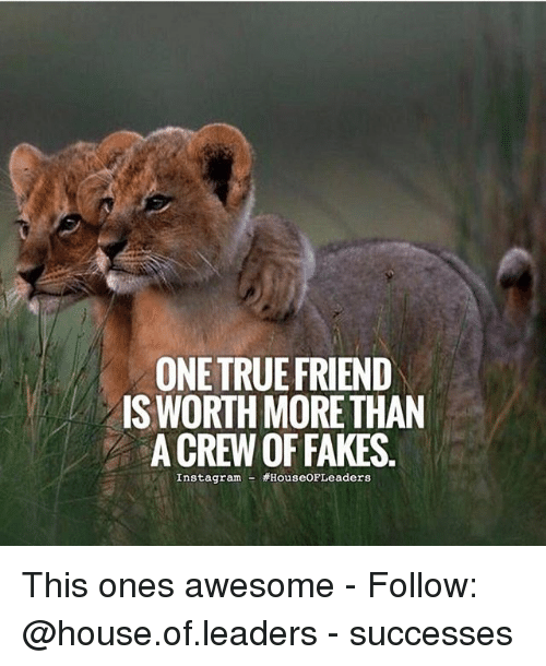 """Memes, 🤖, and True Friend: ONE TRUE FRIEND  ISWORTH MORE THAN  ACREWOFFAKES  Instagrama  HouseOF""""Leaders This ones awesome - Follow: @house.of.leaders - successes"""