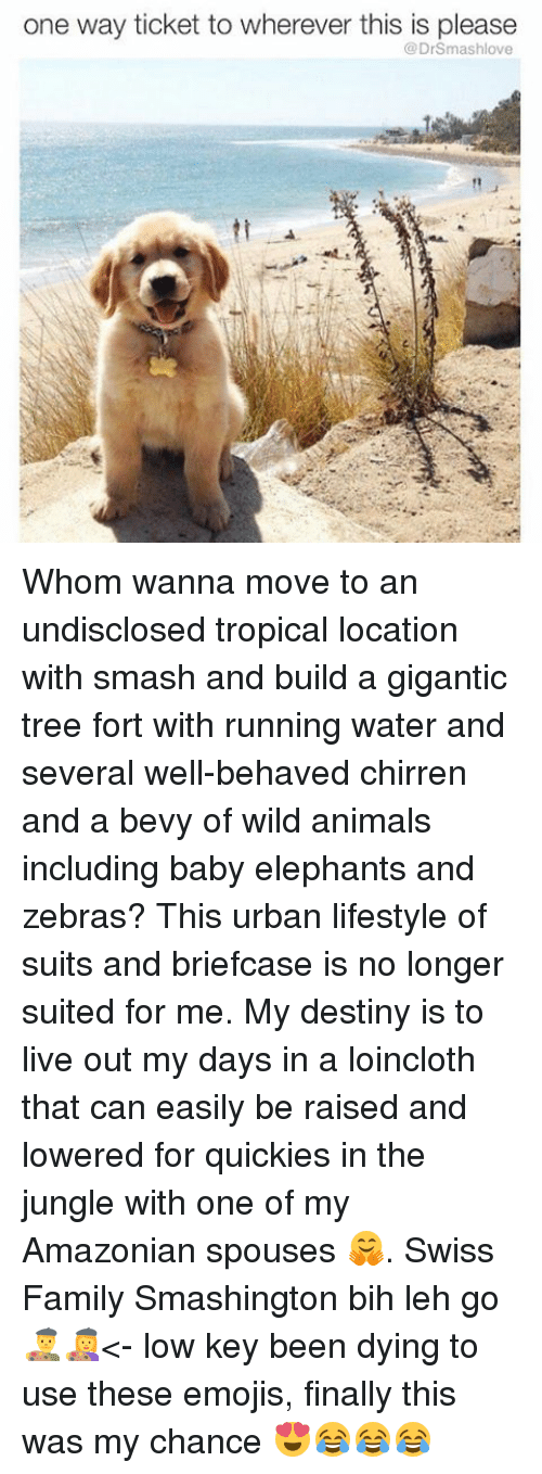 Baby Elephants: one way ticket to wherever this is please  DrSmashlove Whom wanna move to an undisclosed tropical location with smash and build a gigantic tree fort with running water and several well-behaved chirren and a bevy of wild animals including baby elephants and zebras? This urban lifestyle of suits and briefcase is no longer suited for me. My destiny is to live out my days in a loincloth that can easily be raised and lowered for quickies in the jungle with one of my Amazonian spouses 🤗. Swiss Family Smashington bih leh go 👨🎨👩🎨<- low key been dying to use these emojis, finally this was my chance 😍😂😂😂