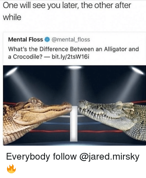 Memes, Alligator, and Jared: One will see you later, the other after  while  Mental Floss@mental _floss  What's the Difference Between an Alligator and  a Crocodile?一bit.ly/2tsw16i Everybody follow @jared.mirsky 🔥