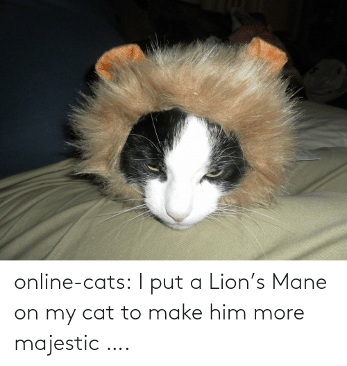 Lions: online-cats:  I put a Lion's Mane on my cat to make him more majestic ….