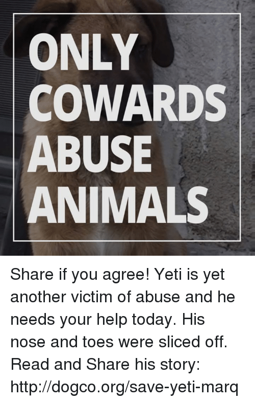 memes: ONLY  COWARDS  ABUSE  ANIMALS Share if you agree!  Yeti is yet another victim of abuse and he needs your help today. His nose and toes were sliced off. Read and Share his story: http://dogco.org/save-yeti-marq