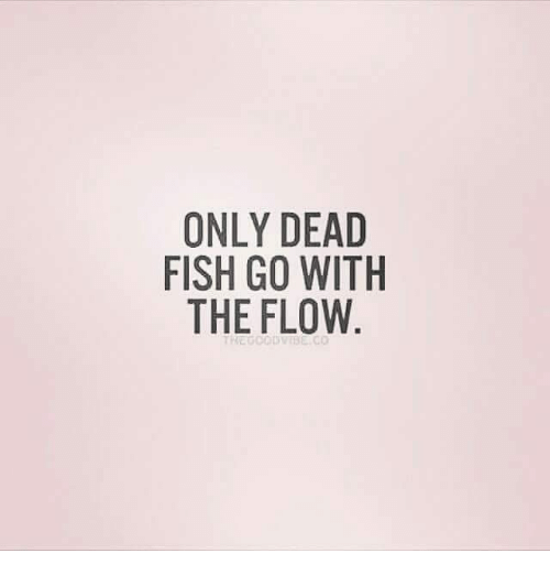 Only dead fish go with the flow good meme on sizzle for Only dead fish go with the flow