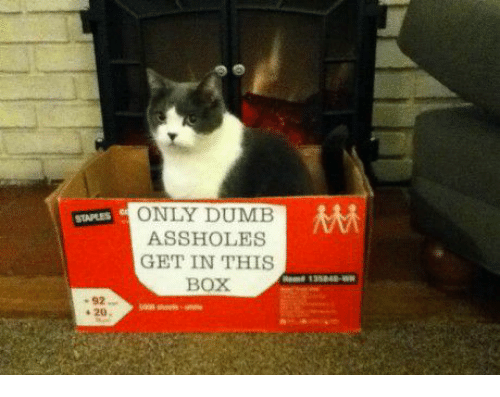 Asshols: ONLY DUMB  MM  STAPLES ASSHOLES  GET IN THIS  BOX  20