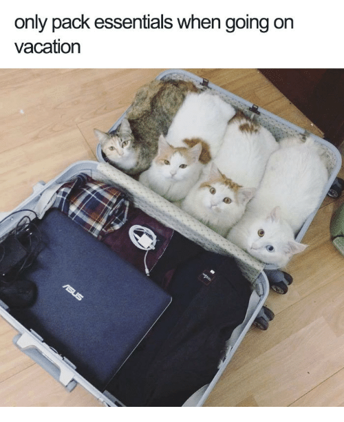Vacation, Essentials, and  Pack: only pack essentials when going on  vacation