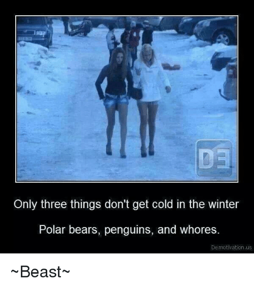 demotivational: Only three things don't get cold in the winter  Polar bears, penguins, and whores  Demotivation us ~Beast~