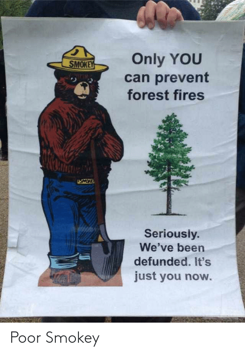Only You: Only YOU  SMOKEY  can prevent  forest fires  NIMIM  USMOR  Seriously.  We've been  defunded. It's  just you now. Poor Smokey