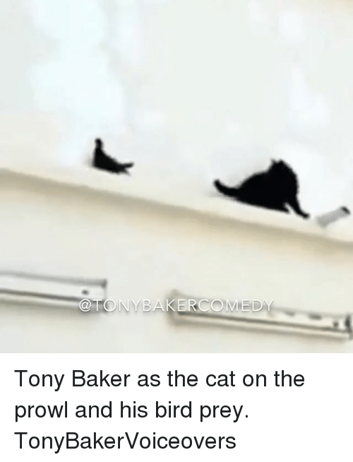 memes: ONYBAKERCOMED Tony Baker as the cat on the prowl and his bird prey. TonyBakerVoiceovers