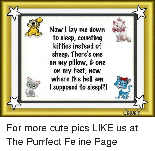 Lay's, Memes, and My Pillow: OO  Now I lay me down  to sleep, counting  kitties instead of  sheep. There's one  on my pillow, & one  on my feet, now  where the hell am  supposed to sleep!?! For more cute pics LIKE us at The Purrfect Feline Page