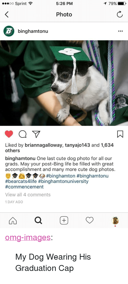 "graduation cap: oo Sprint  5:26 PM  79%  Photo  binghamtonu  Liked by briannagalloway, tanyajo143 and 1,634  others  binghamtonu One last cute dog photo for all our  grads. May your post-Bing life be filled with great  accomplishment and many more cute dog photos.  da  #binghamton #binghamtonu  #bearcats4life #binghamtonuniversity  #commencement  View all 4 comments  1 DAY AGO <p><a href=""https://omg-images.tumblr.com/post/161847750297/my-dog-wearing-his-graduation-cap"" class=""tumblr_blog"">omg-images</a>:</p>  <blockquote><p>My Dog Wearing His Graduation Cap</p></blockquote>"