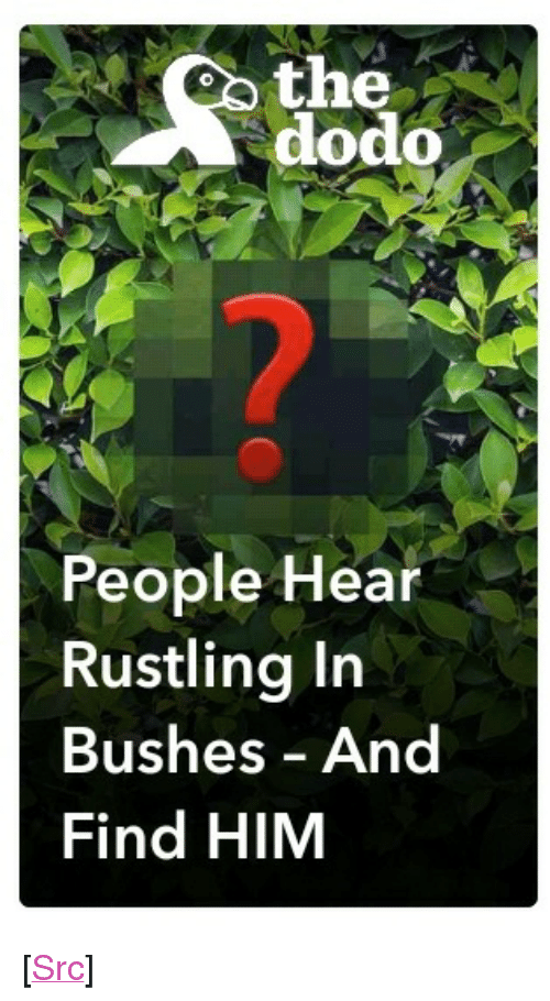 """Rustling: oo the  dodo  People Hear  Rustling Irn  Bushes And  Find HIM <p>[<a href=""""https://www.reddit.com/r/surrealmemes/comments/7cv6g5/this_snapchat_article/"""">Src</a>]</p>"""