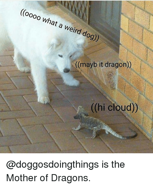 Memes, Weird, and Cloud: ((oooo what a weird dog))  ((mayb it dragon))  ((hi cloud)) @doggosdoingthings is the Mother of Dragons.