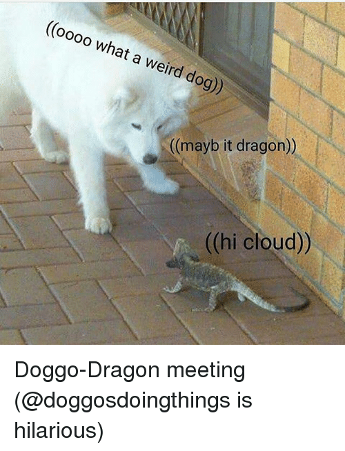 Funny, Weird, and Cloud: ((oooo what a weird dog))  ((mayb it dragon))  ((hi cloud)) Doggo-Dragon meeting (@doggosdoingthings is hilarious)