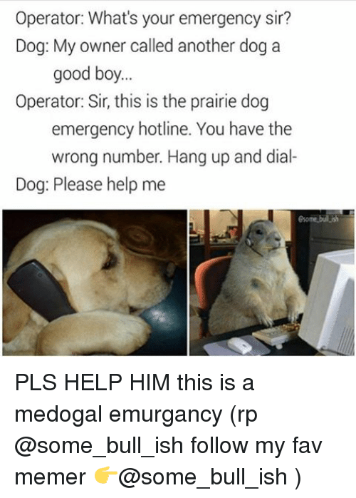 Memerized: Operator: What's your emergency sir?  Dog: My owner called another dog a  good boy  Operator: Sir, this is the prairie dog  emergency hotline. You have the  wrong number. Hang up and dial-  Dog: Please help me  Some bul ish PLS HELP HIM this is a medogal emurgancy (rp @some_bull_ish follow my fav memer 👉@some_bull_ish )