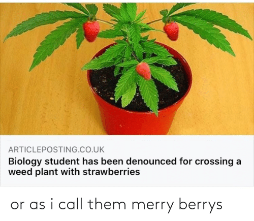 merry: or as i call them merry berrys