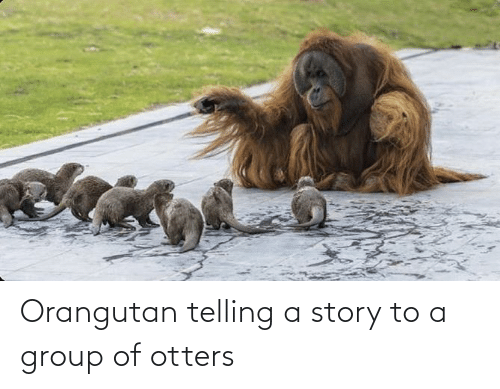 Otters: Orangutan telling a story to a group of otters