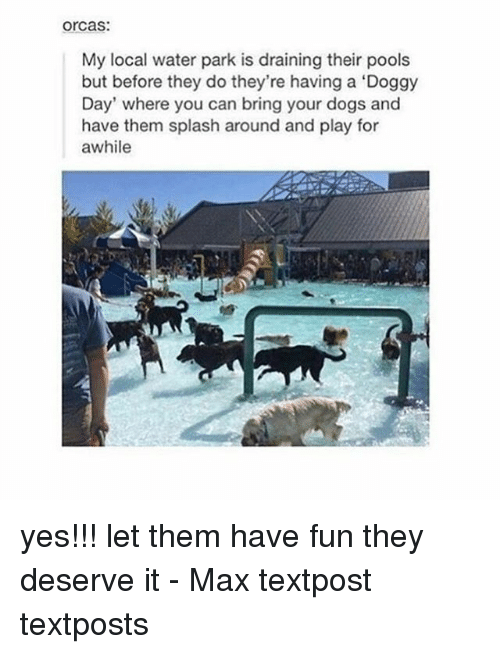 Dogs, Memes, and Orcas: orcas:  My local water park is draining their pools  but before they do they're having a 'Doggy  Day' where you can bring your dogs and  have them splash around and play for  awhile yes!!! let them have fun they deserve it - Max textpost textposts