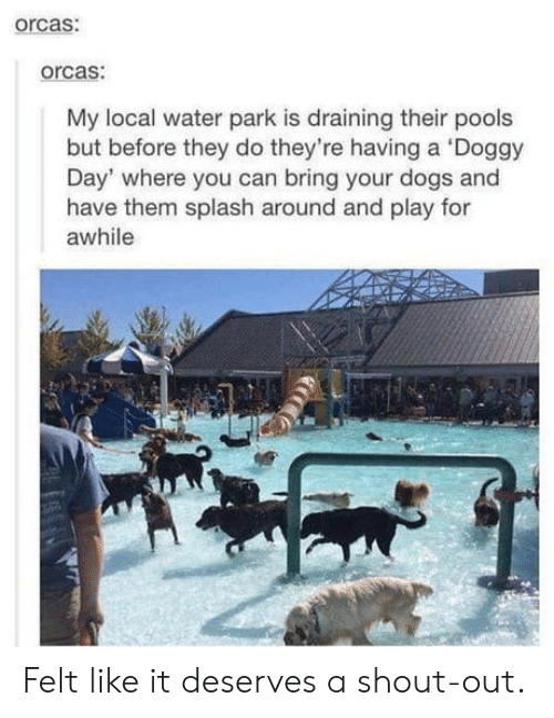 Draining: orcas:  orcas:  My local water park is draining their pools  but before they do they're having a Doggy  Day' where you can bring your dogs and  have them splash around and play for  awhile Felt like it deserves a shout-out.