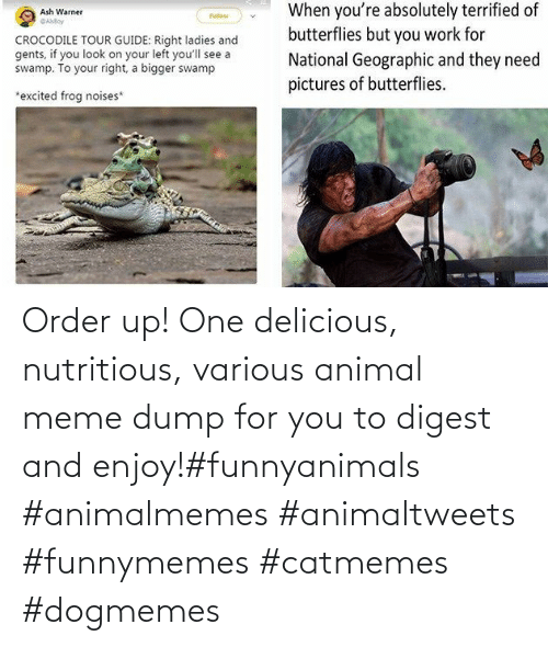 Animal Meme: Order up! One delicious, nutritious, various animal meme dump for you to digest and enjoy!#funnyanimals #animalmemes #animaltweets #funnymemes #catmemes #dogmemes