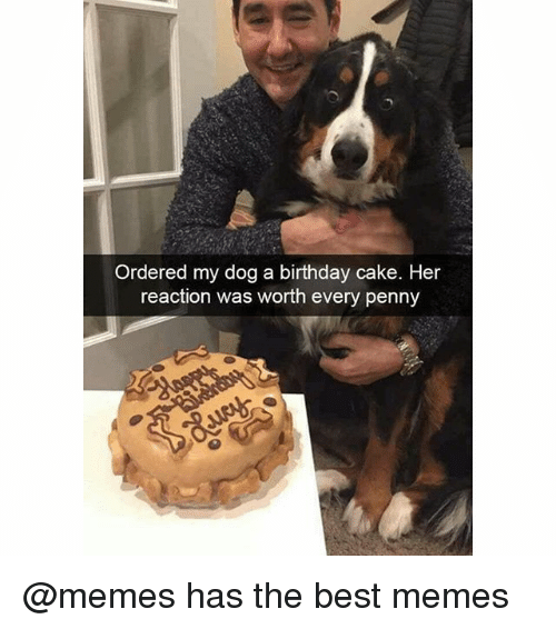 Birthday Cake Dog Meme ~ Ordered my dog a birthday cake her reaction was worth every penny has the best memes