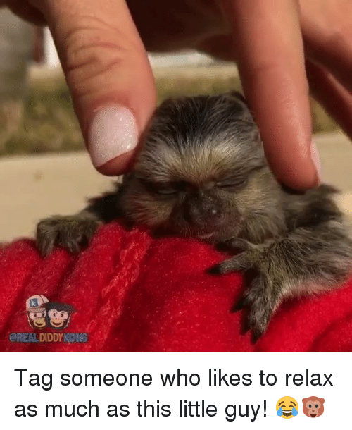Diddy Kong: OREAL DIDDY KONG Tag someone who likes to relax as much as this little guy! 😂🐵