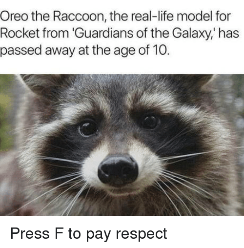 oreo: Oreo the Raccoon, the real-life model for  Rocket from 'Guardians of the Galaxy,' has  passed away at the age of 10. Press F to pay respect