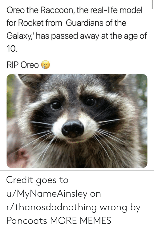 oreo: Oreo the Raccoon, the real-life model  for Rocket from 'Guardians of the  Galaxy,' has passed away at the age of  10  RIP Oreo Credit goes to u/MyNameAinsley on r/thanosdodnothing wrong by Pancoats MORE MEMES