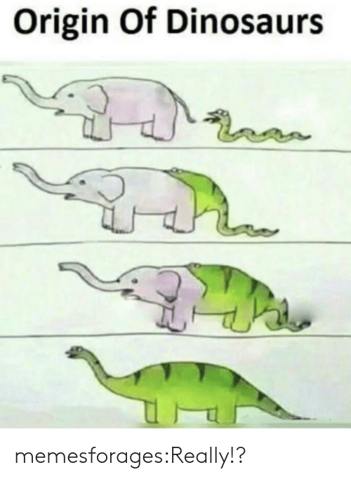 Origin Of: Origin Of Dinosaurs memesforages:Really!?