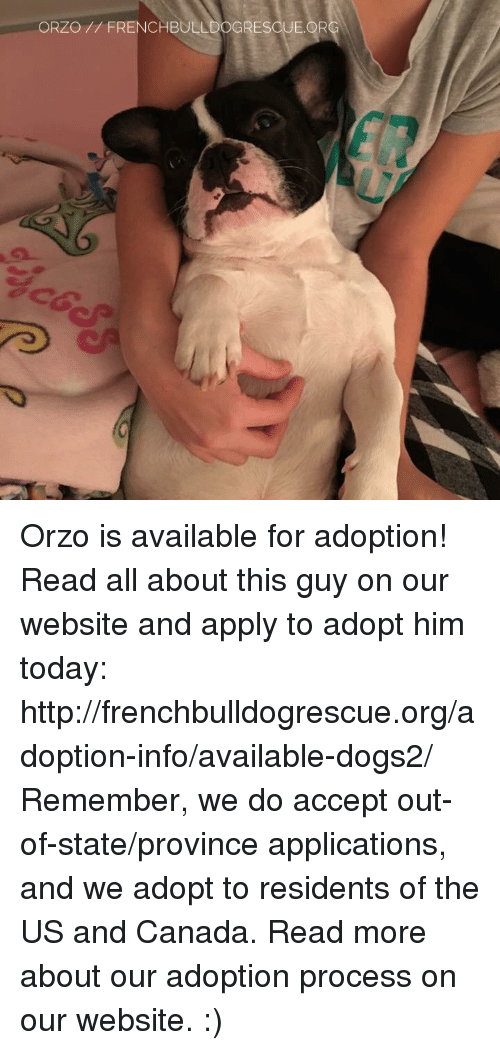 us-and-canada: ORZO FRENCHBULLDOGRESOUE.OR Orzo is available for adoption! Read all about this guy on our website <location, likes, dislikes> and apply to adopt him today: http://frenchbulldogrescue.org/adoption-info/available-dogs2/  Remember, we do accept out-of-state/province applications, and we adopt to residents of the US and Canada. Read more about our adoption process on our website. :)