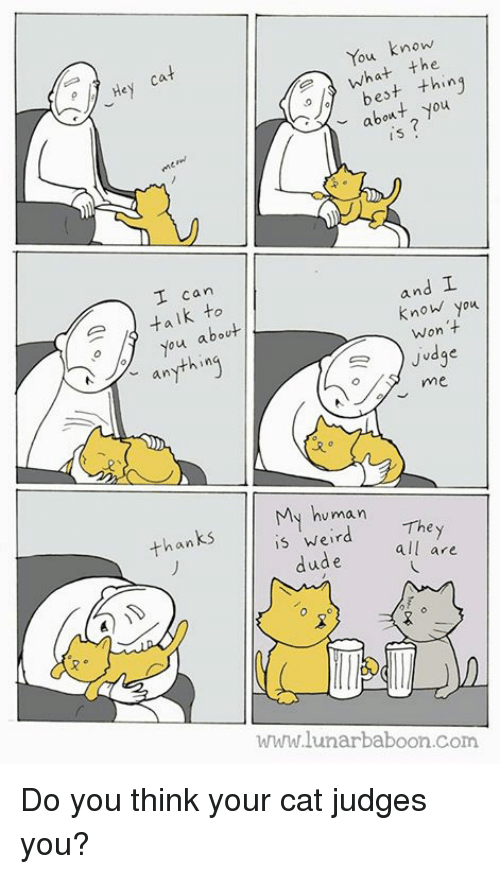 Dude, Memes, and Weird: os  ou know  what thing  bet thing  about you  I can  aik to  ou about  and  know you  anything  Won t  Judge  My human  is weird  thanks  They  dude all are  www.lunarbaboon.Com Do you think your cat judges you?