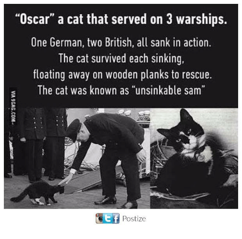 """Memes, British, and 🤖: """"Oscar"""" a cat that served on 3 warships.  One German, two British, all sank in action.  The cat survived each sinking  floating away on wooden planks to rescue.  s The cat was known as """"unsinkable sam  ET Postize"""