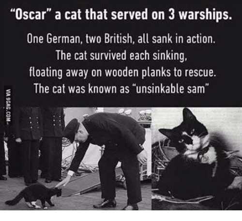 """sinking: """"Oscar"""" a cat that served on 3 warships.  One German, two British, all sank in action.  The cat survived each sinking,  floating away on wooden planks to rescue.  The cat was known as """"unsinkable sam"""""""