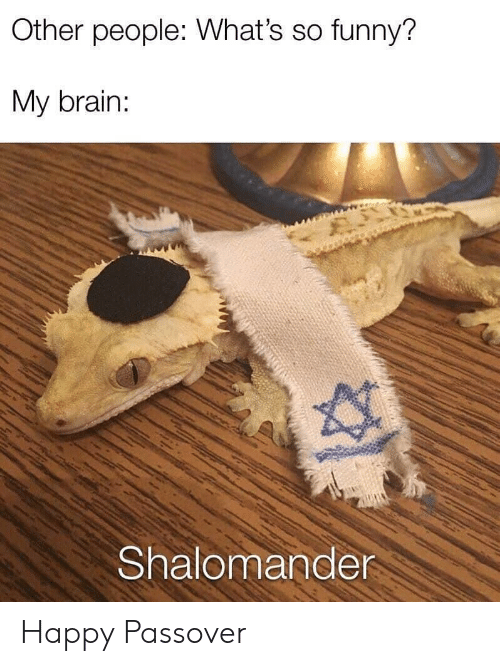 passover: Other people: What's so funny?  My brain:  Shalomande Happy Passover