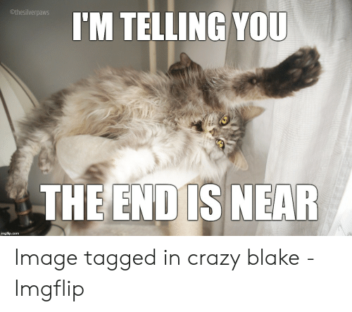 The End Is Near Meme: Othesilverpaws  I'M TELLING YOU  THE END IS NEAR  imgflip.com Image tagged in crazy blake - Imgflip