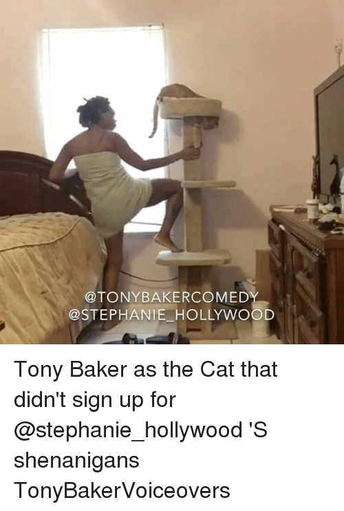 Memes, Shenanigans, and 🤖: OTONYBAKERCOMEDY  STEPHANIE HOLLYWOOD Tony Baker as the Cat that didn't sign up for @stephanie_hollywood 'S shenanigans TonyBakerVoiceovers
