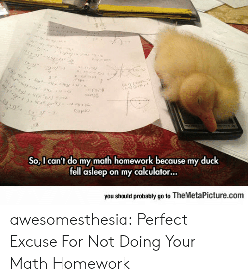 Math Homework: otrux24  Cay (  e (s,9  Clipio  2  So,I can't do my math homework because my duck  fell asleep on my calculator...  you should probably go to TheMetaPicture.com awesomesthesia:  Perfect Excuse For Not Doing Your Math Homework