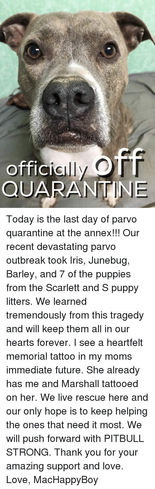 Heartfeltly: OTT  offici  QUARANTINE Today is the last day of parvo quarantine at the annex!!! Our recent devastating parvo outbreak took Iris, Junebug, Barley, and 7 of the puppies from the Scarlett and S puppy litters. We learned tremendously from this tragedy and will keep them all in our hearts forever. I see a heartfelt memorial tattoo in my moms immediate future. She already has me and Marshall tattooed on her. We live rescue here and our only hope is to keep helping the ones that need it most. We will push forward with PITBULL STRONG. Thank you for your amazing support and love.   Love, MacHappyBoy