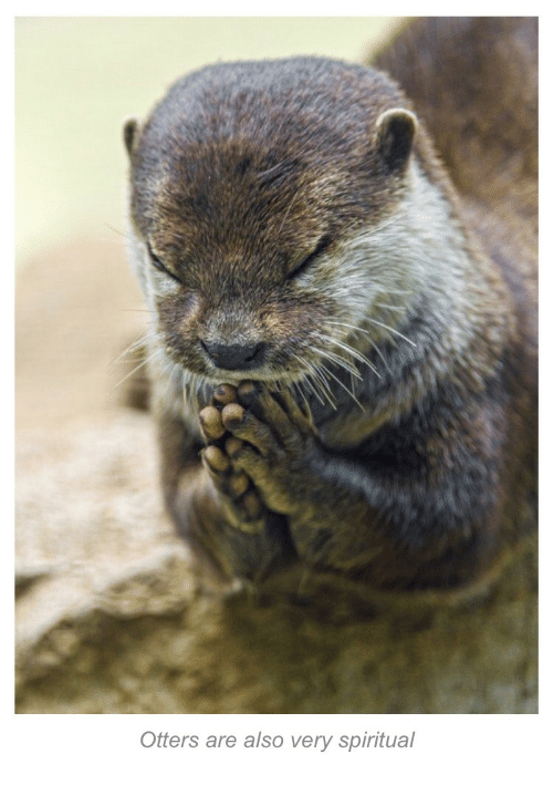 Otters: Otters are also very spiritual