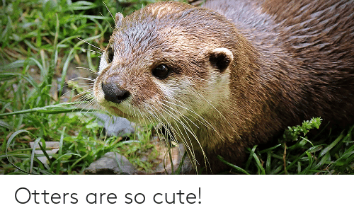 Otters: Otters are so cute!