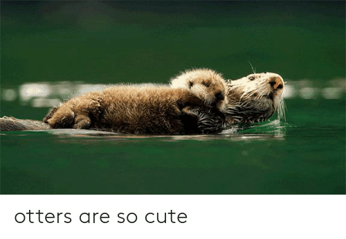 Otters: otters are so cute