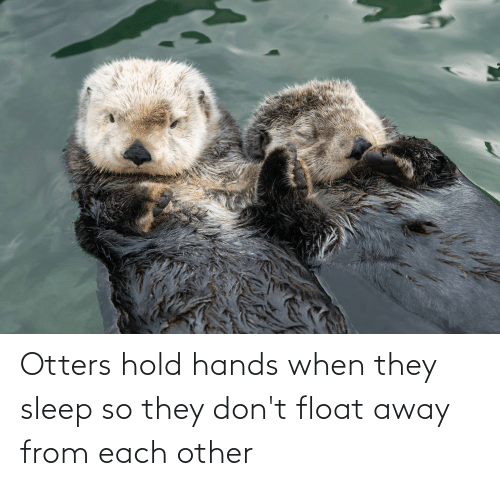 Otters: Otters hold hands when they sleep so they don't float away from each other