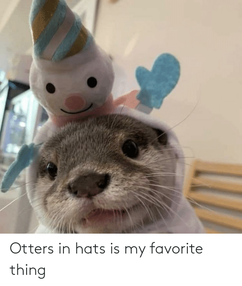 Otters: Otters in hats is my favorite thing